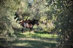 Epitalion_AEON_DROPS_HORSES